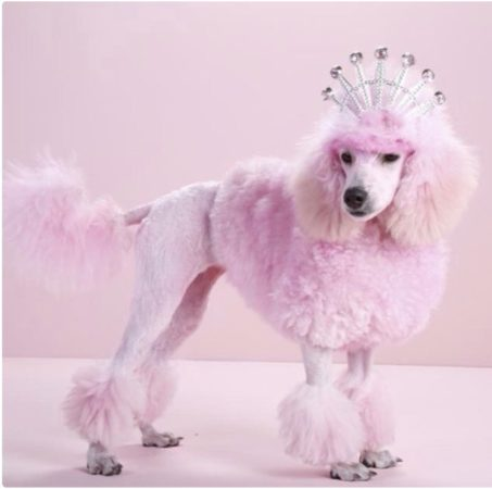 The Pink Froo Froo Poodle stereotype