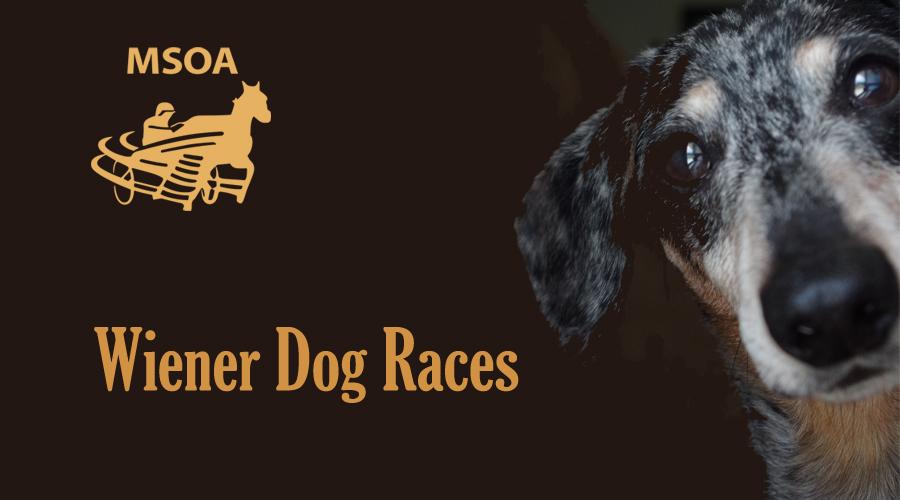 Wiener Dog Races to be held August 18