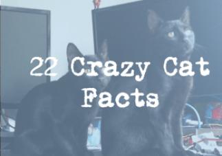 22 crazy cat facts