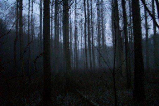 Running in the dark, tips for running in winter - dark woods