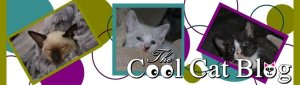 The Cool Cat Blog - Cute Kitty Blogs