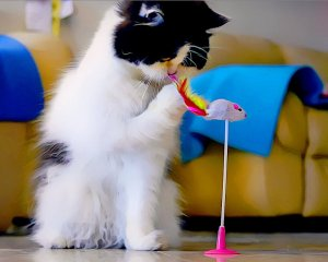 Indoor Cat Care - Toys