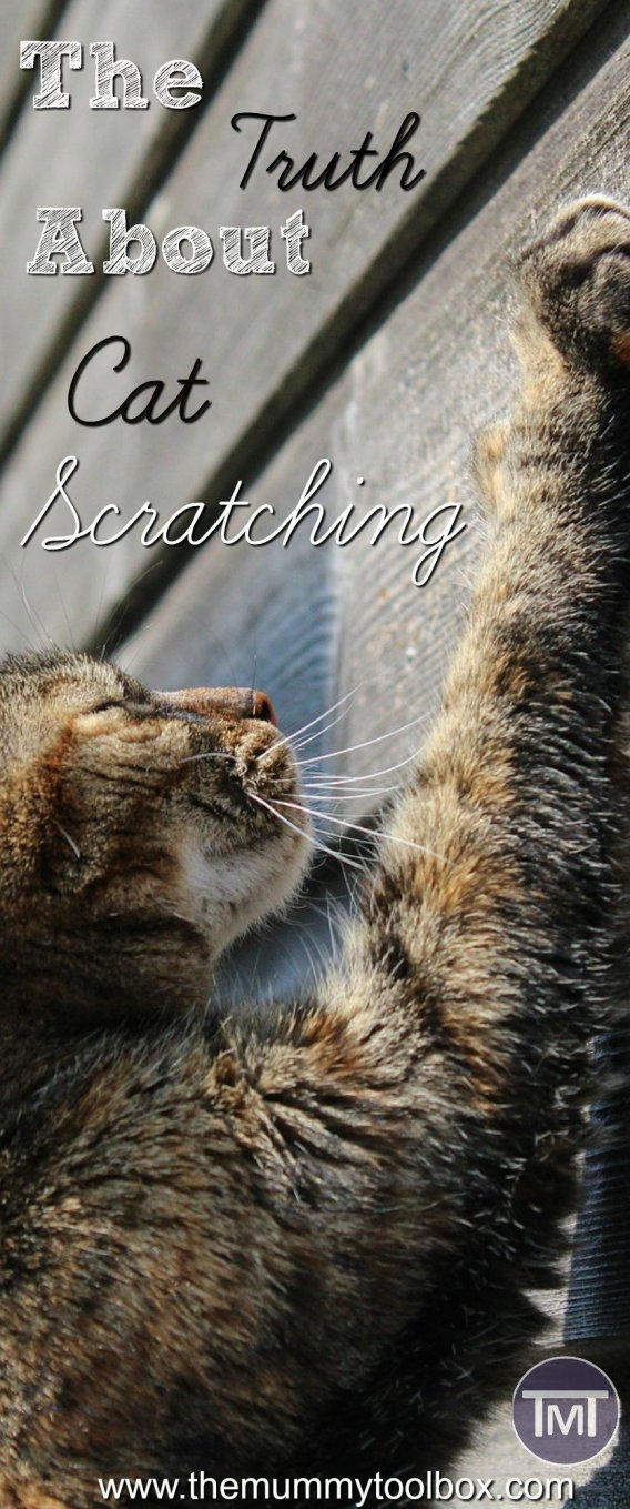 What's with all the scratching? Answering the kitty questions about; scratching, behaviour, types of posts and getting them off the furniture! Plus some homemade projects that are a frugal alternative to stop you having to buy some!