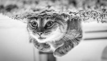 cat upside down