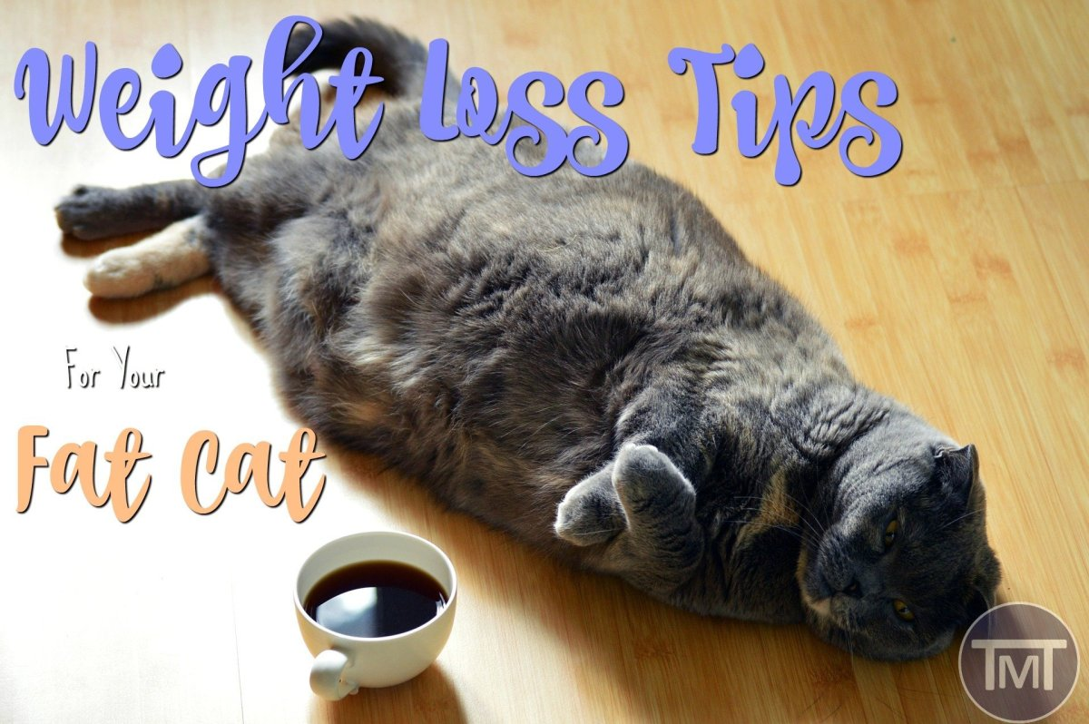 Weight Loss Tips For Your Fat Cat