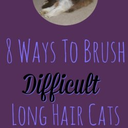 """8 Ways To Brush Difficult Cats - The Help you need so your cat can have their best """"furday"""""""
