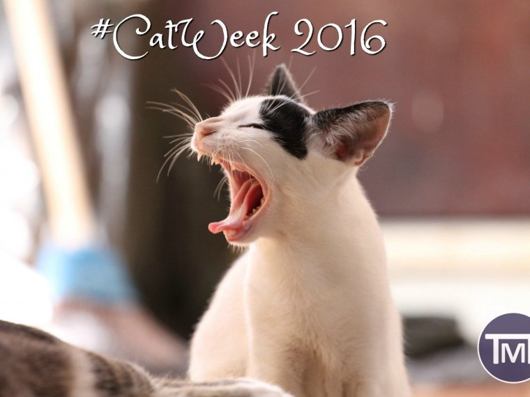 #Catweek2016 feature image