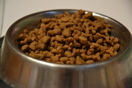 Dry cat food - wet vs dry: which is best?