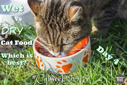 Find out the pros and cons or dry and wet cat food and determine which is better!