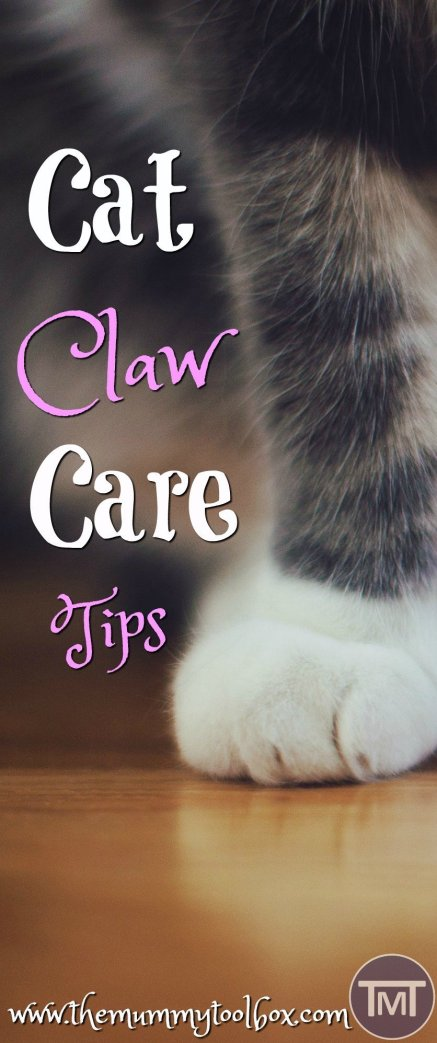 Who doesn't love a mani-pedi?? Make sure that you take care of your cat's claws with these claw care tips to avoid health complications in the future.