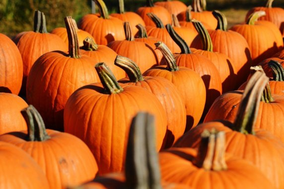 Pumpkins - 5 Ways to have Halloween on a budget