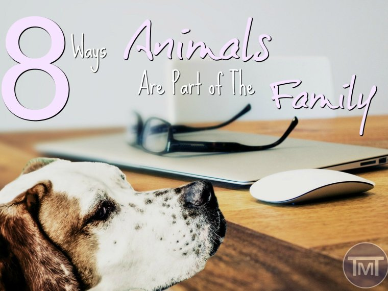 8 ways animals are part of the family feature image
