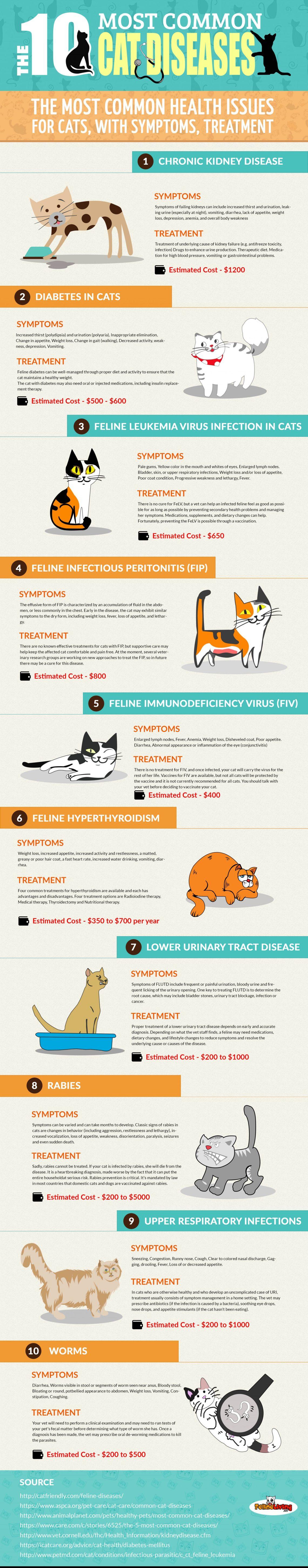 Common Cat Diseases infographic raw