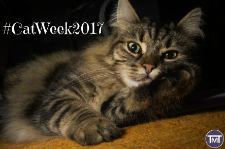 #catweek2017 feature pic cat lying down