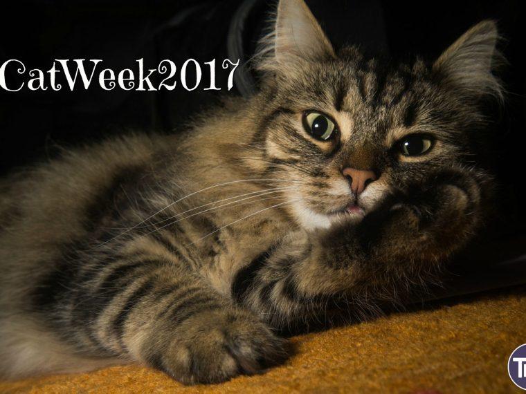 #catweek2017