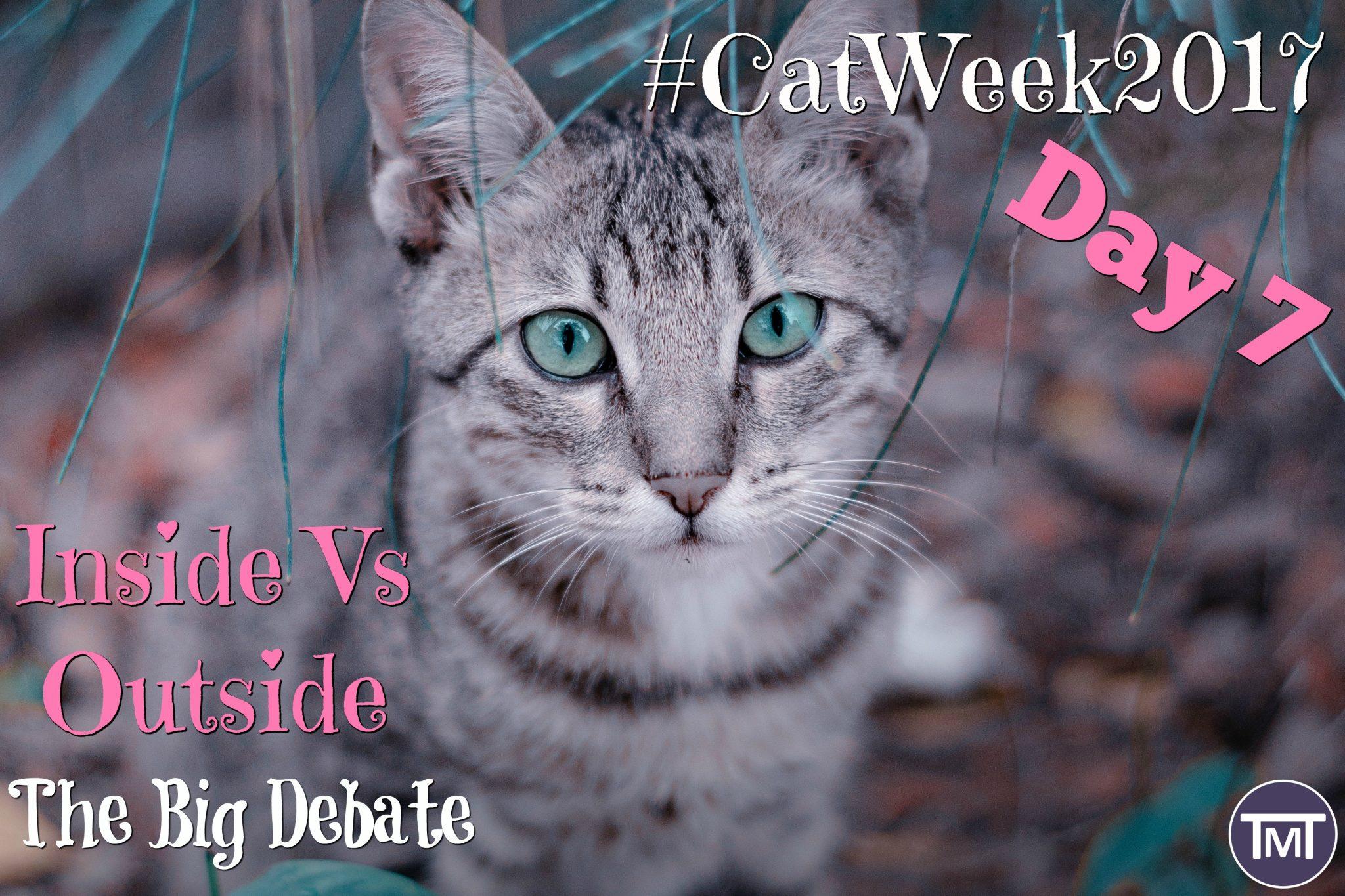 Indoor Vs Outdoor   The Great Cat Debate