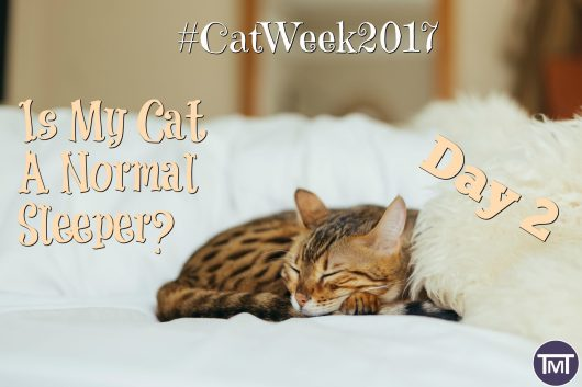 day 2 #catweek2017 is my cat a normal sleeper?