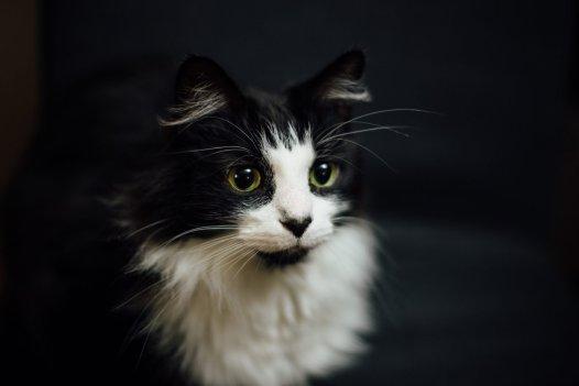 cat stress warning signs
