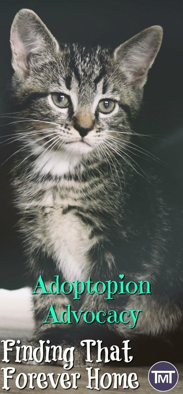 kitten standing - adoption advocacy on rehoming cats and rescues as well as UK and US cat rehoming charities, the adoption process. cute cats, #adopt don't shop, #petadoption #catadoption #adoptdontshop