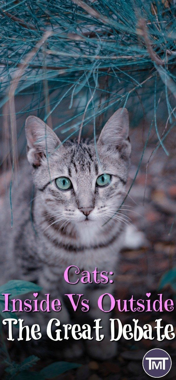 Cat in the grass. The great cat debate, should I keep my cat indoors or outdoors? The pros and cons for each as well as my viewpoint