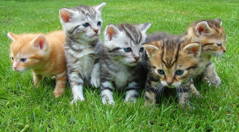 cat pregnancy kitten litter grass