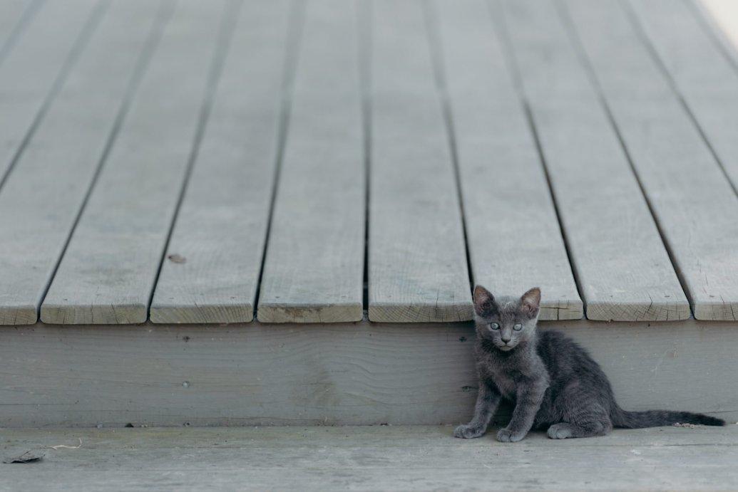 kitten on a porch - cat adoption