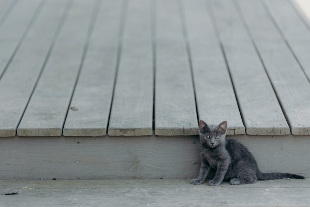 kitten on a porch - cat adoption