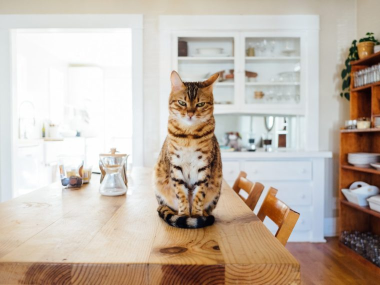 cat sitting on a table in small flat
