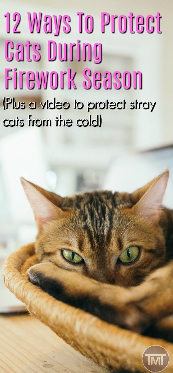 How to protect your feline friends during November, Christmas and New Year firework season and beyond. Plus how you can protect stray cats too! #catcare #cats #catlovers #cat #fireworks