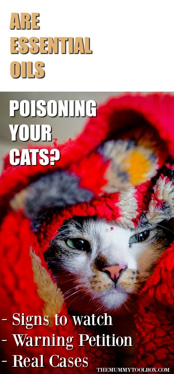 Are essential oils harming cats? Here's a warning and petition that could be responsible for making your cat sick. Plus it's potentially fatal. #catcare #cats #catlovers #essentialoils #health