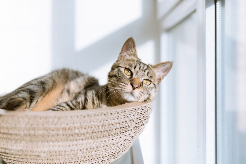 A cat bathing in sunlight which reduces anxiety in cats