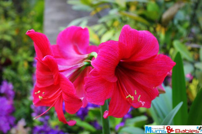 Gardenbythebay30a
