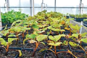 The bulk of McMinnville's and central Tennessee's nursery products end up going north or to the east. In all, nurseries in a five-county region, which includes McMinnville, produce 19 million containers of plants every year. (Photo provided)