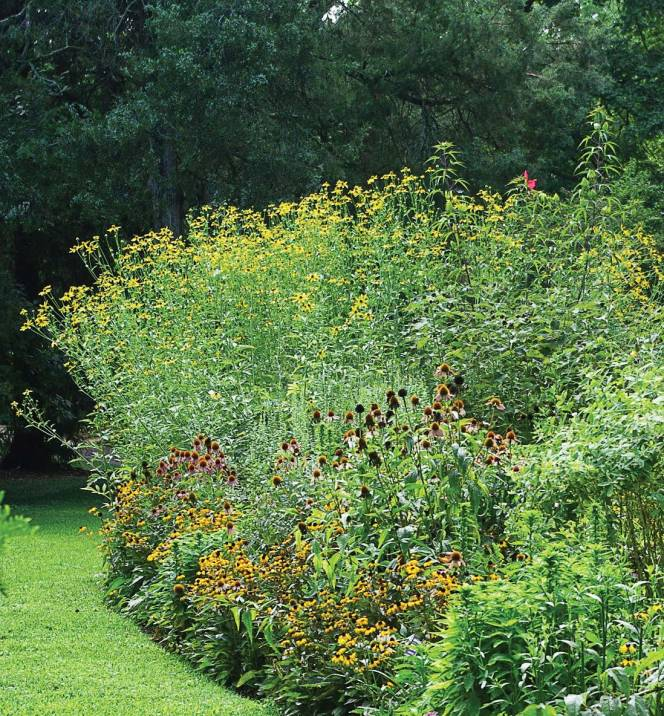 Pictured is a flowerbed featuring native plants. (Photo provided)