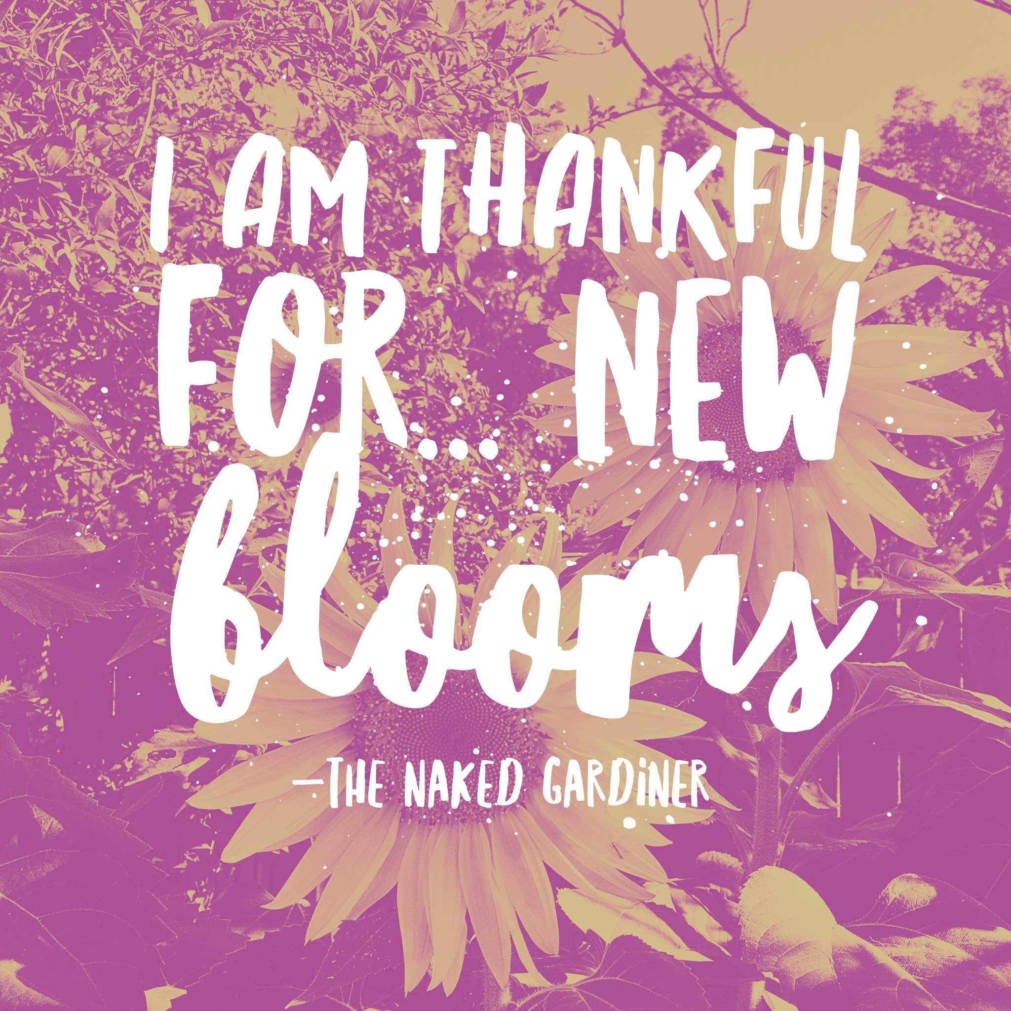 thankful-thursdays-new-blooms-the-naked-gardiner-kathy-gardiner