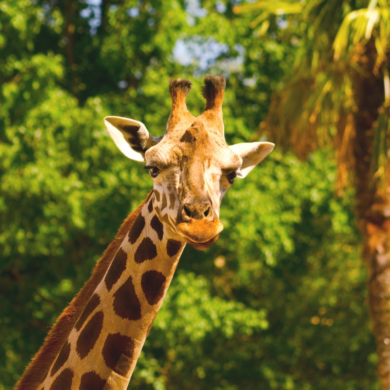 Kids birthday party ideas - visiting a zoo!