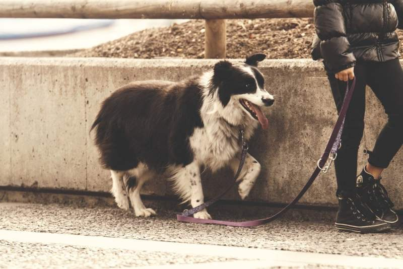 Walking the Dog for Family Exercise