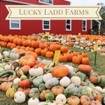 Lucky Ladd Farms (And, More!)