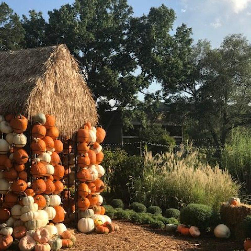 Nashville Fall Festivities Guide 2020
