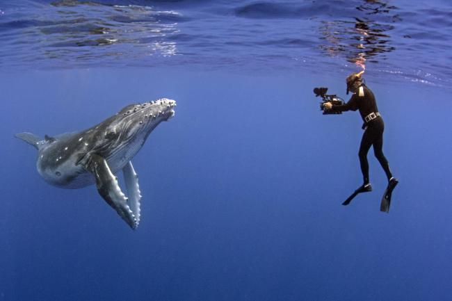 Tonight's TV: Secret Scotland and Humpback Whales: A Detective Story | The National
