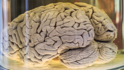 when was the brain discovered