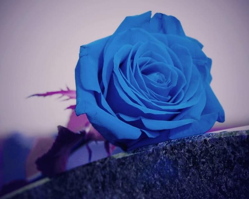 cremation services in Boulder, CO