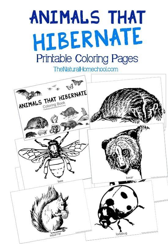Where Do Animals Go In The Winter Worksheet
