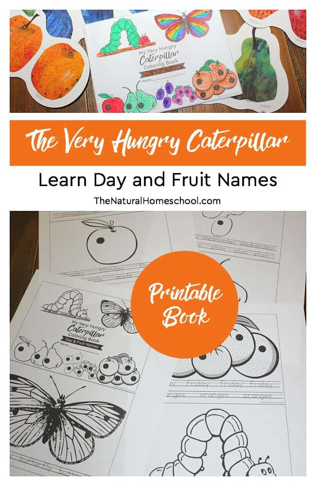 image about Very Hungry Caterpillar Craft Printable named The Pretty Hungry Caterpillar Craft ~ Working day and Fruit Names