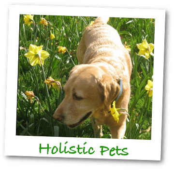 Holistic Pets