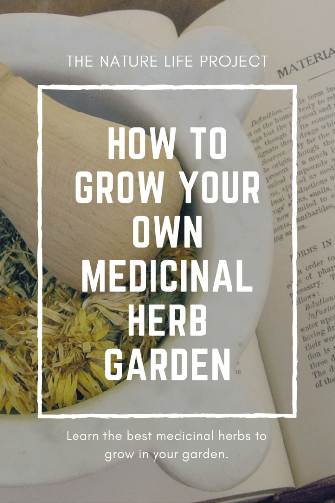 How to grow your own medicinal herb garden. The best herbs to grow in your garden.