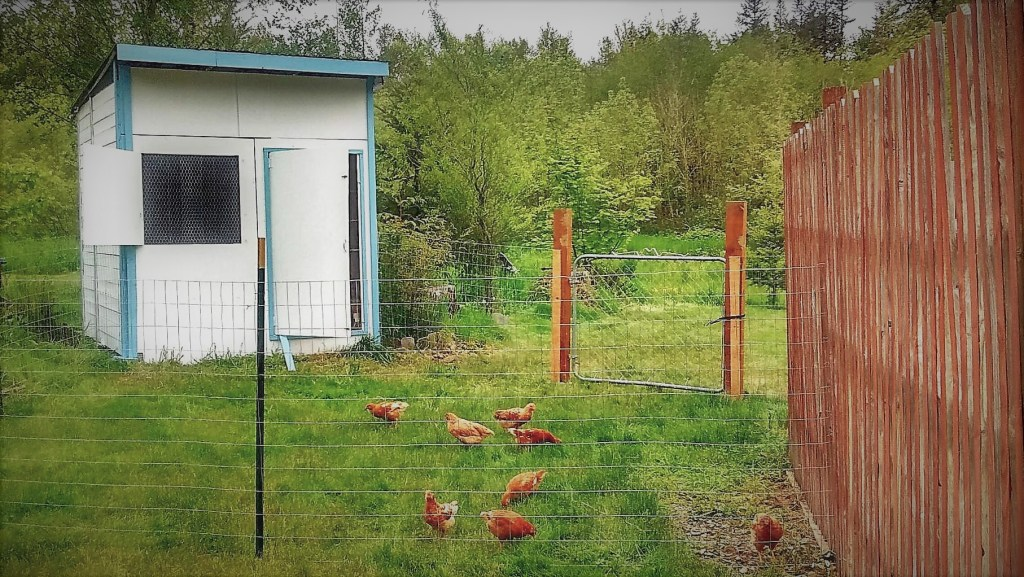 our first flock and their chicken coop