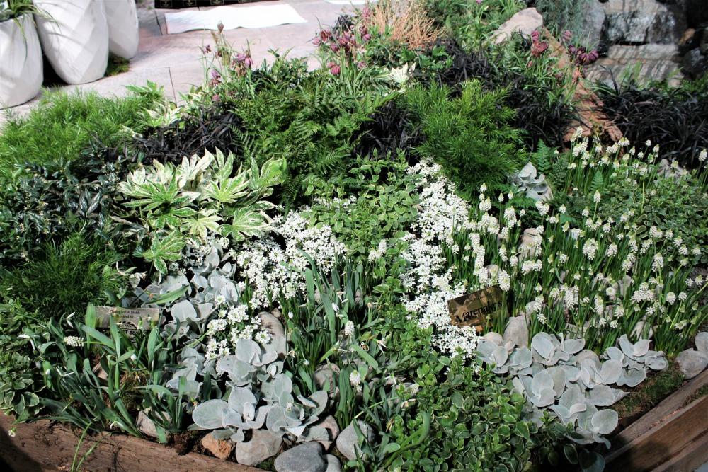 Garden inspiration from seattles nw flower garden show the the chess board garden mightylinksfo Choice Image