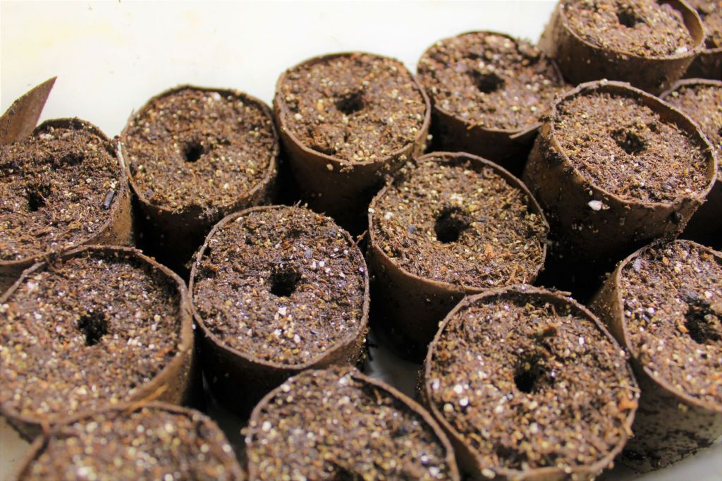 starting seeds with toilet paper rolls