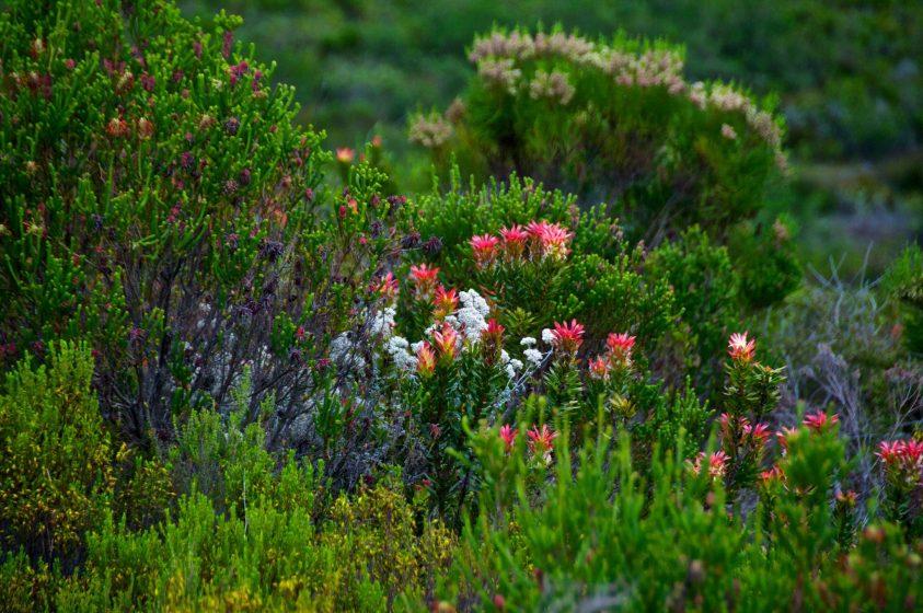 1) Natural vegetation. Credit Brian Ralphs